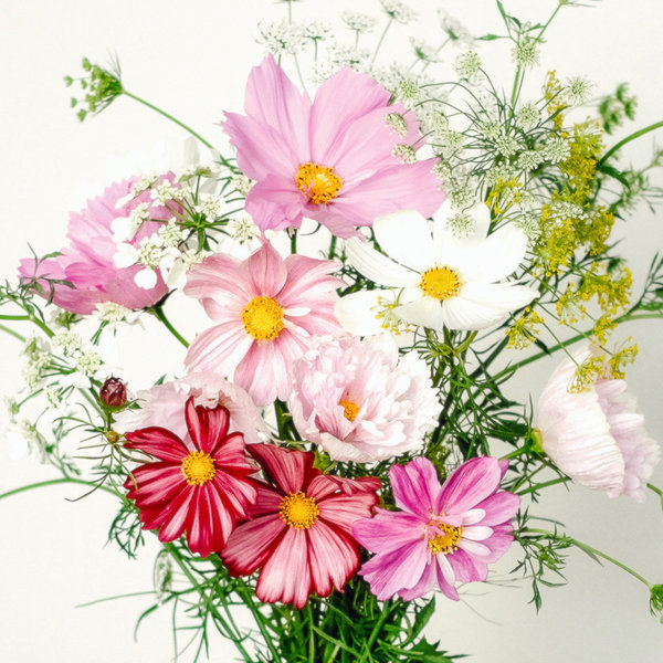 Wild Bouquet Cosmos Collection